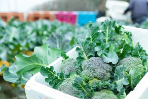野菜 栄養
