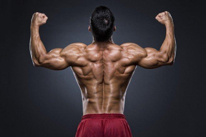 背中の鍛え方